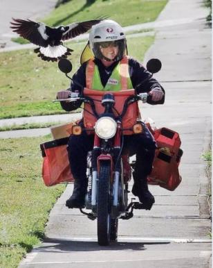 bird helmet